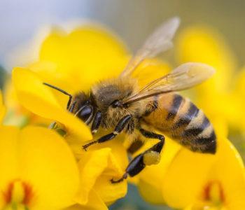 """Лекция на тема """"Пчелата и човека"""""""
